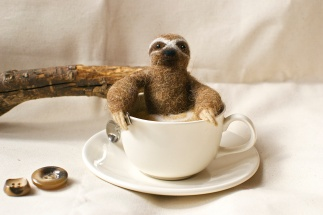 Sloth In A Cup