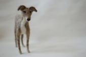 Mouse the whippet (yes, that's her great name!)
