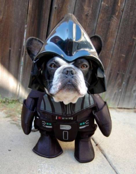 a.baa-Darth-Vaders-Dog-