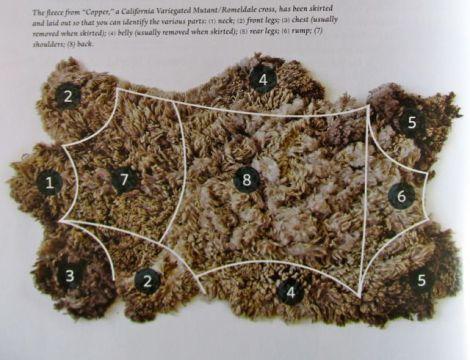 Image taken from wool winding.wordpress.com